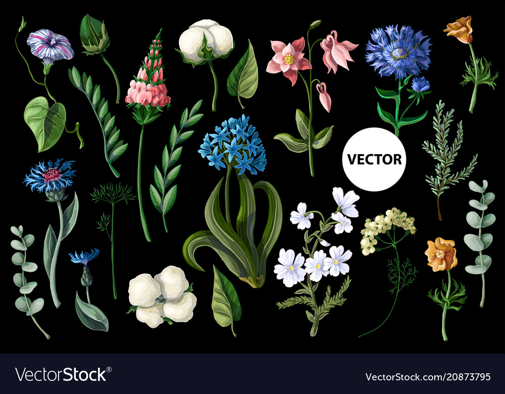 Wild flowers isolated on a black background