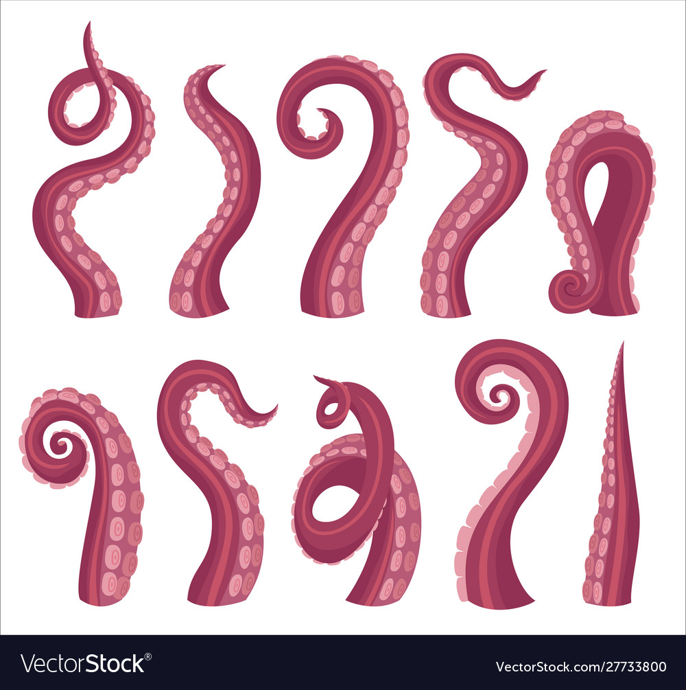 Octopus tentacles cartoon color vector