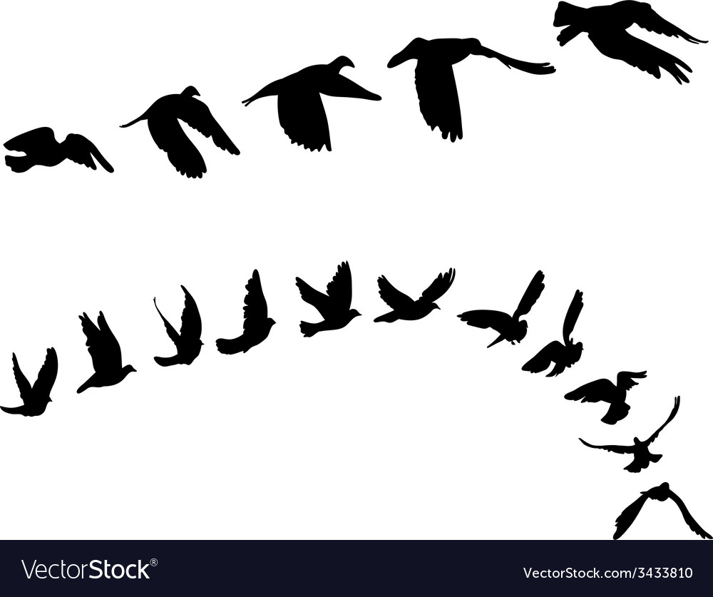 Doves and pigeons set for peace concept and