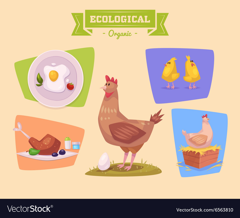 Farm animal and products made out of them Chiken