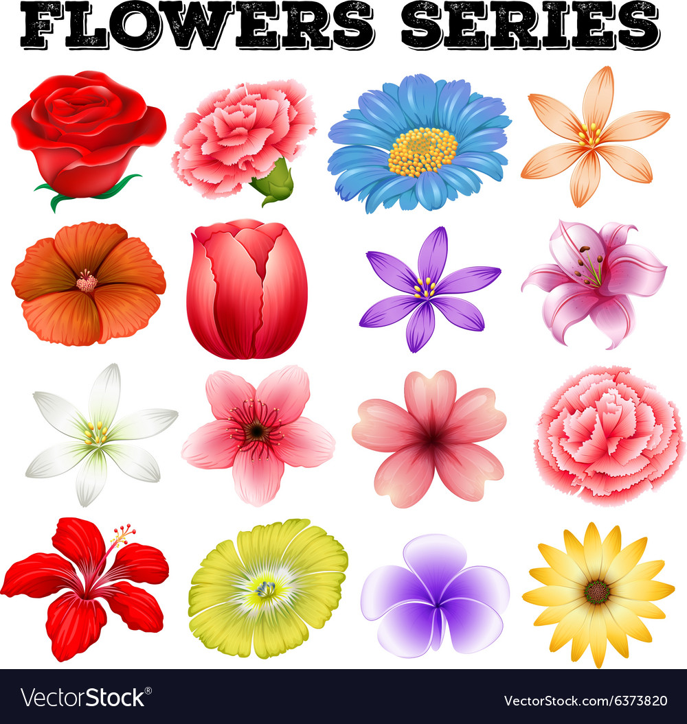 Different Kind Of Flowers Royalty Free Vector Image