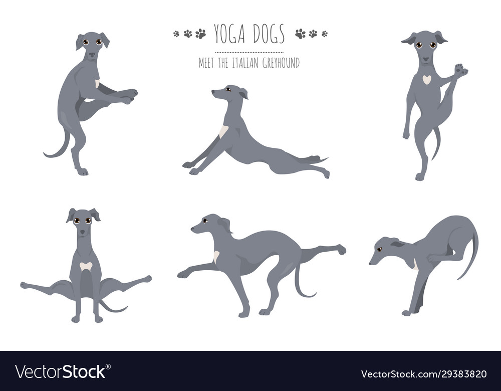 Yoga Dogs Poses And Exercises Poster Design Vector Image