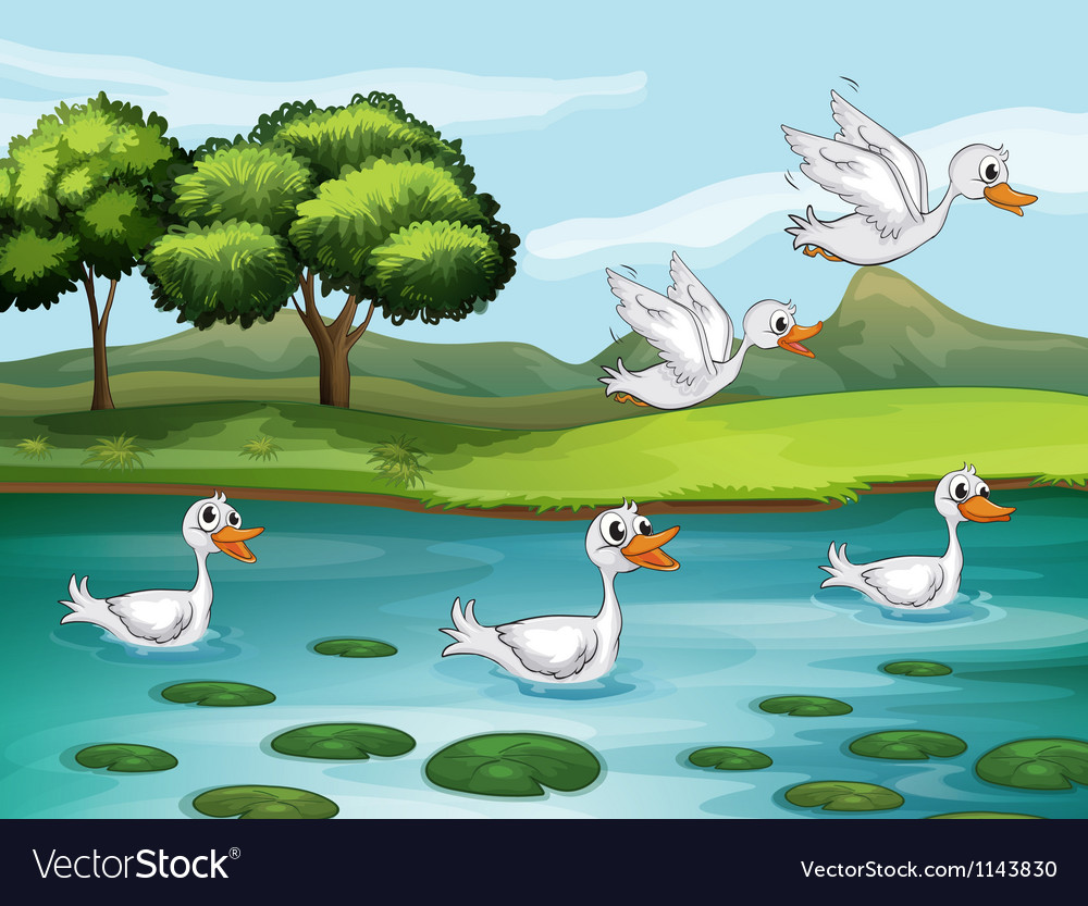 Ducks and water