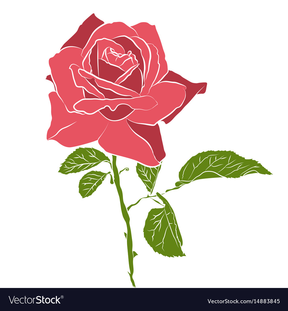 Beautiful hand drawn stencil rose isolated on