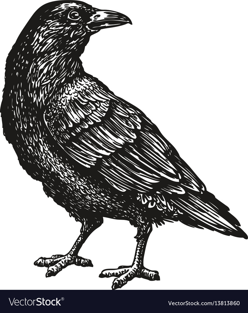 Hand drawn black crow raven bird sketch vector image