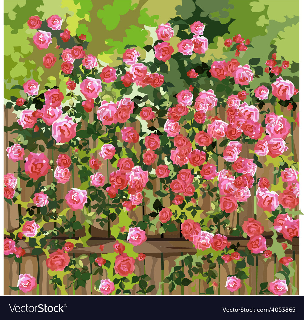 Shrub With Pink Flowers Over A Fence Royalty Free Vector