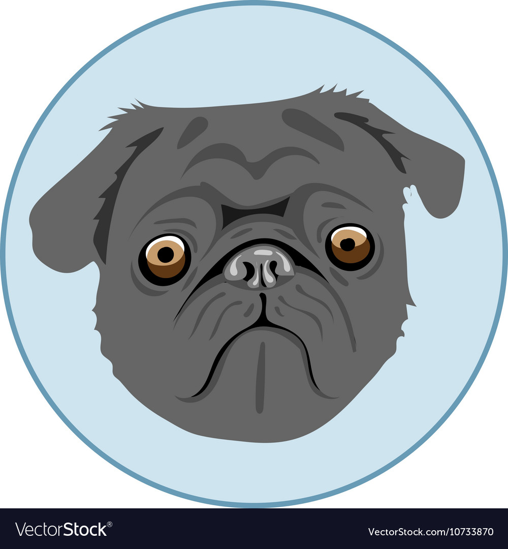 1dd16f954351 Digital pug dog face in blue circle Royalty Free Vector