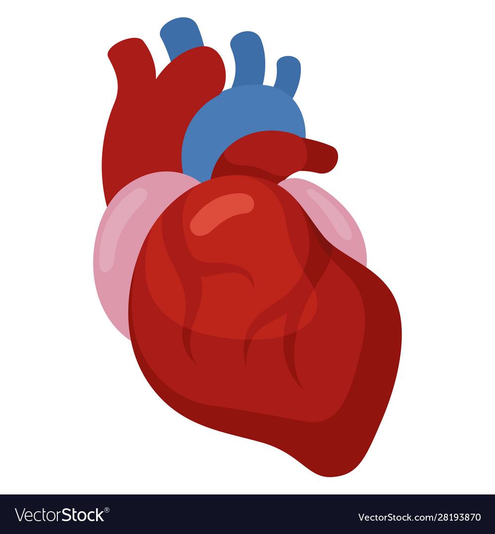 Heart icon cardiology and medicine health symbol