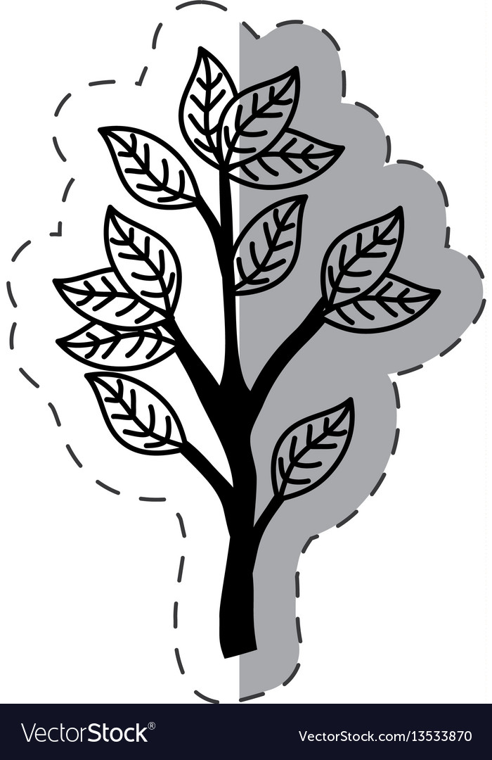 Tree branch ecology monochrome