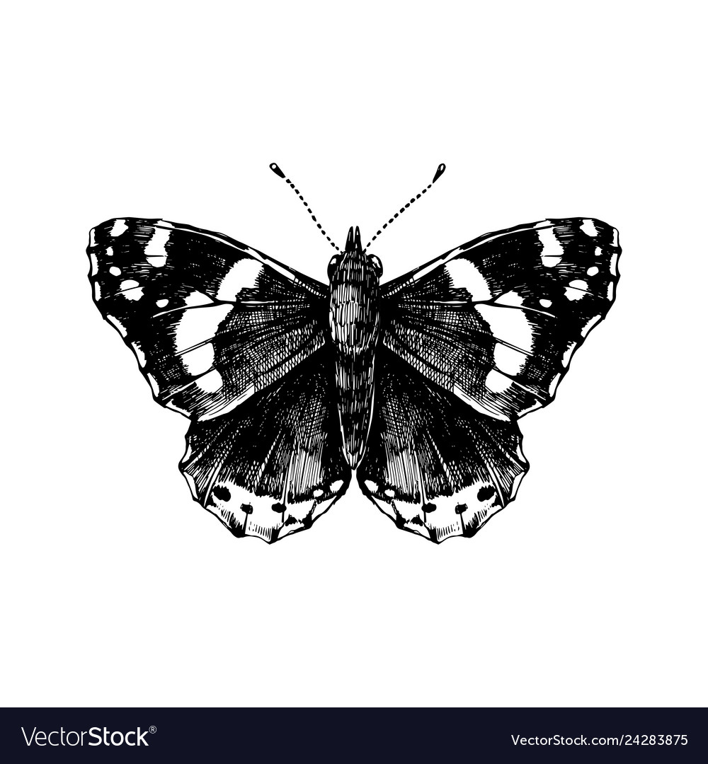 Hand drawn red admiral butterfly