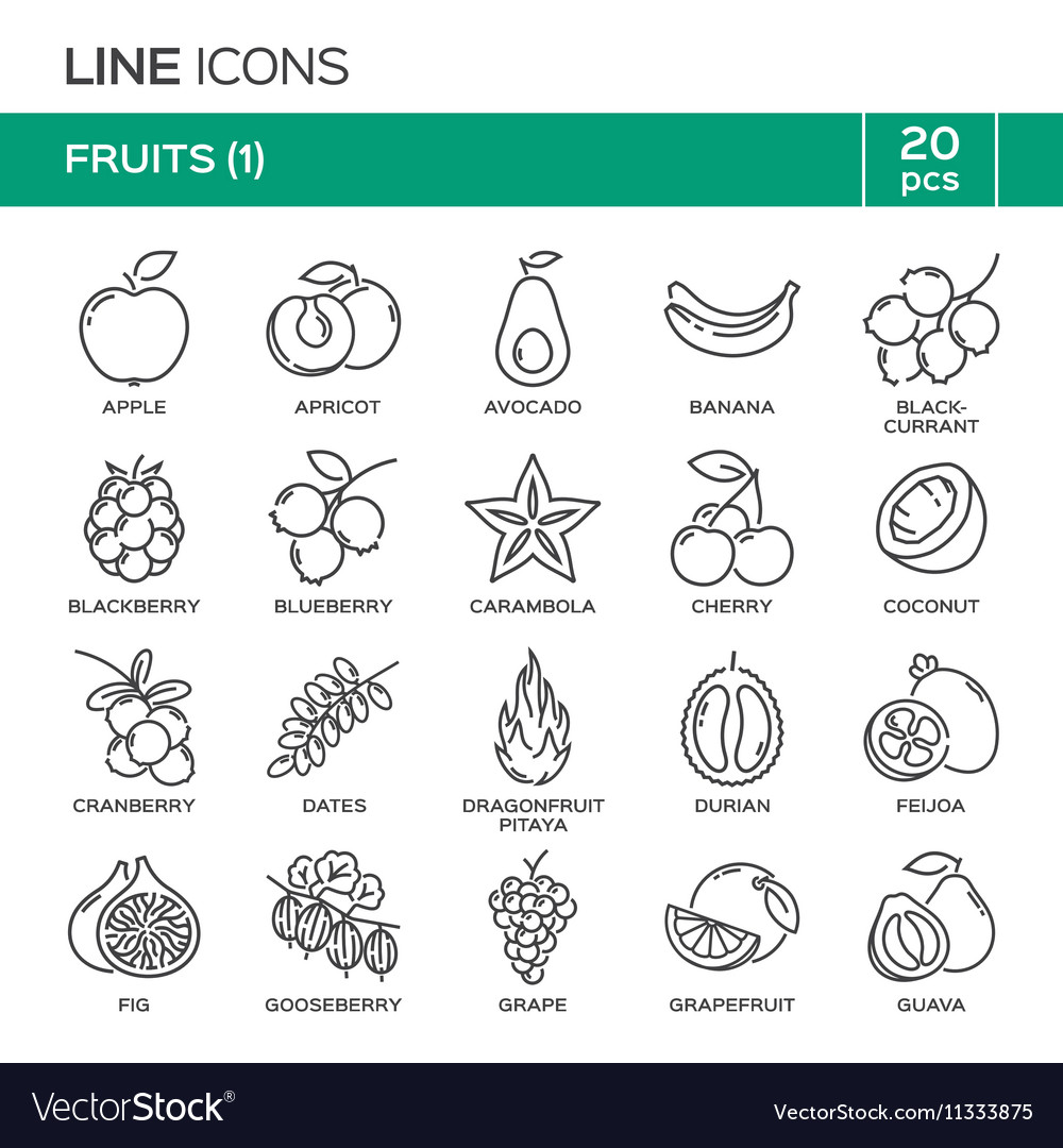 Set of fruit thin line icons in alphabetical order vector image