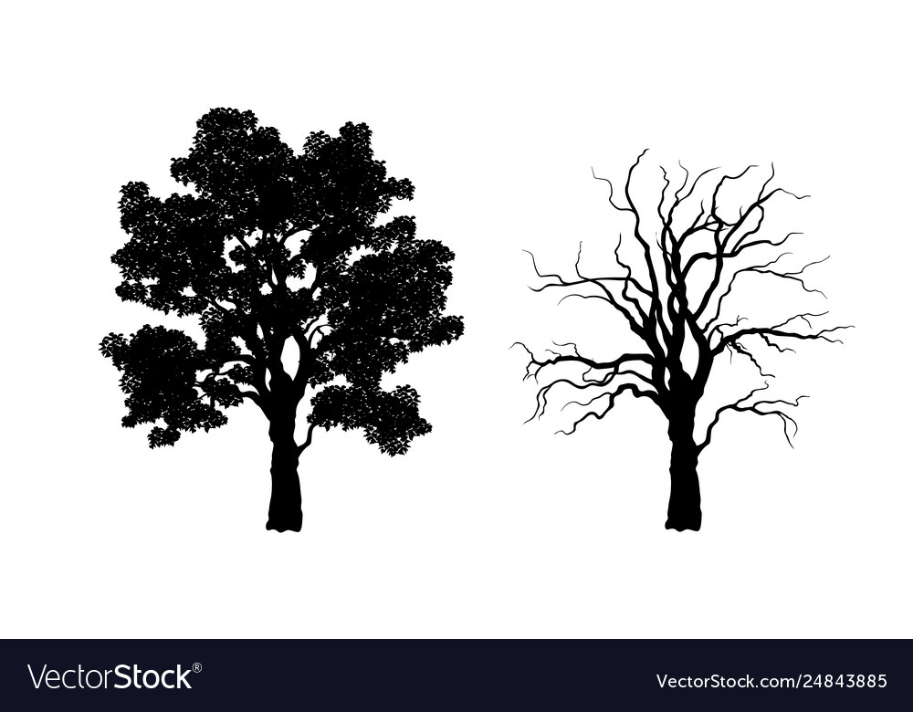 Black silhouette tree forest plant