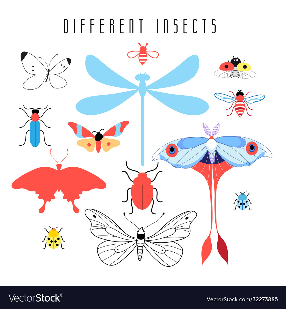 Set different insects
