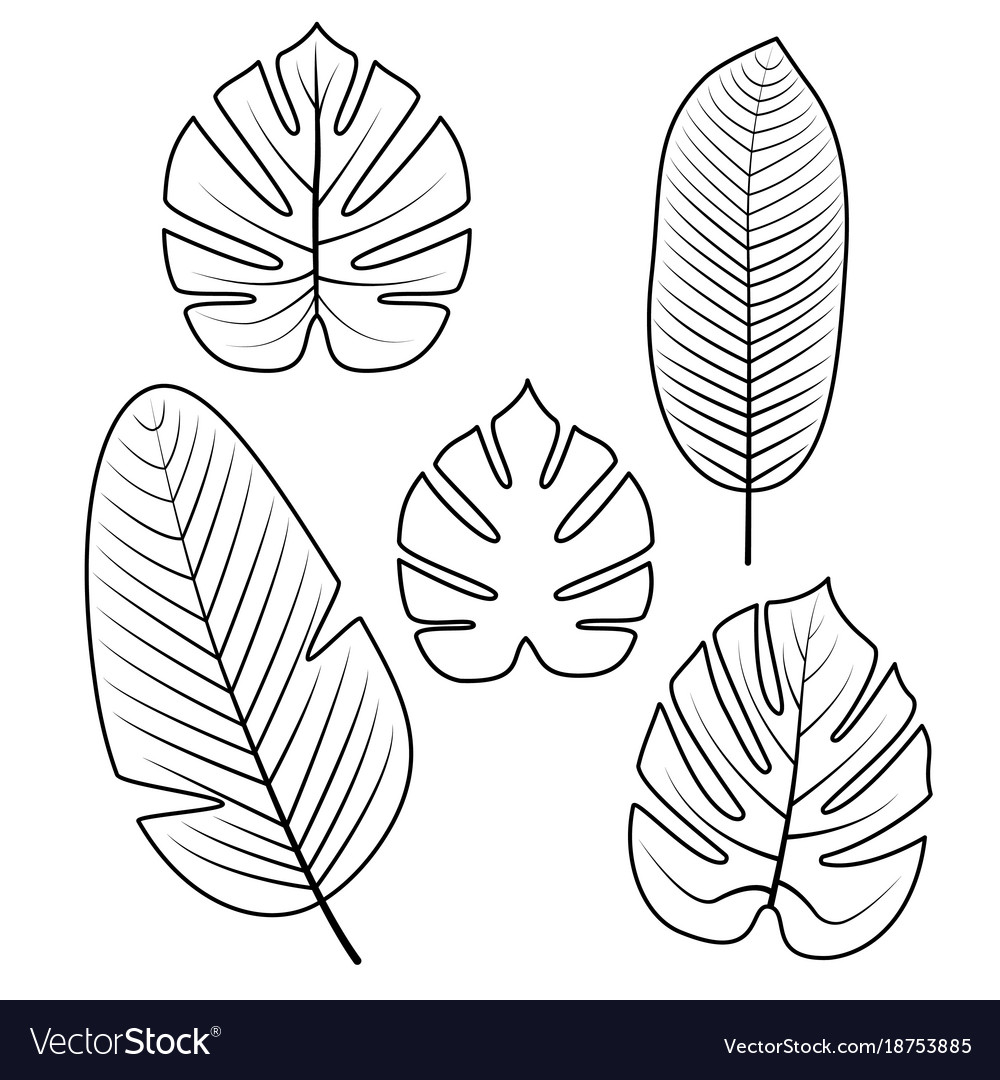 Tropical Leaves Collection Royalty Free Vector Image Square floral frame with watercolor flowers border and outlined leaves. vectorstock
