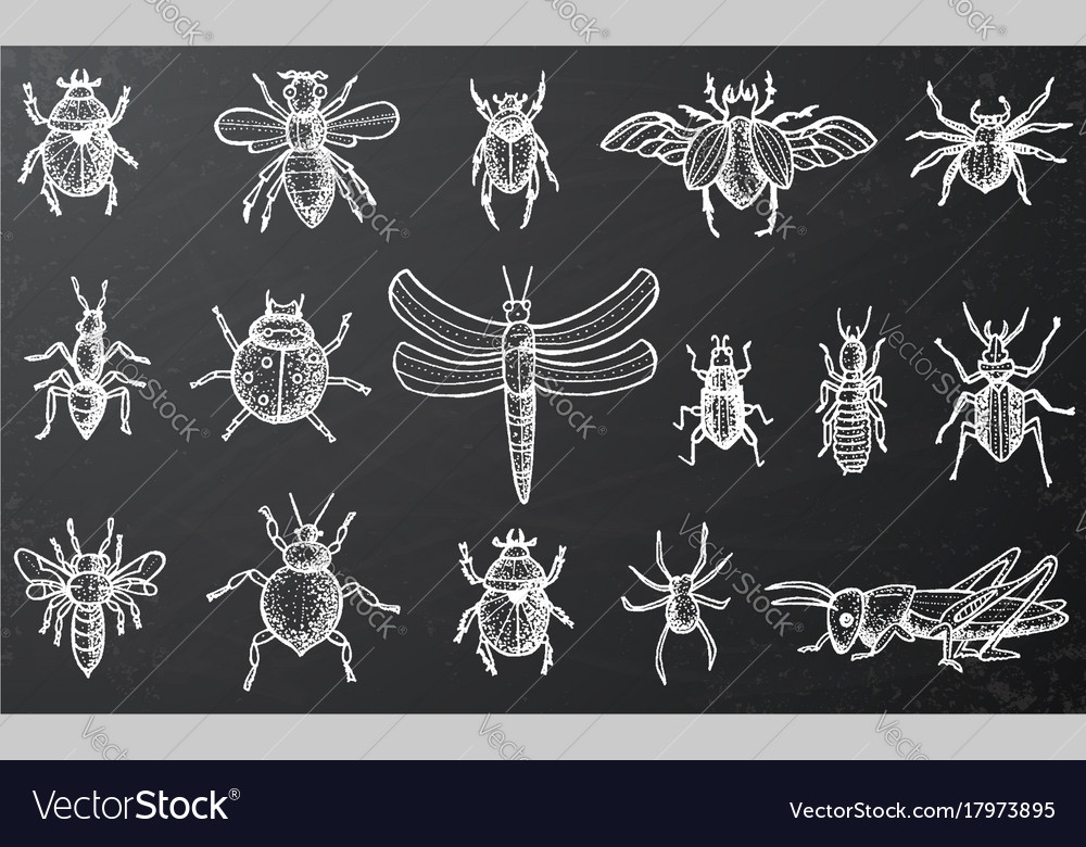 Insects set with beetles bees and spiders on