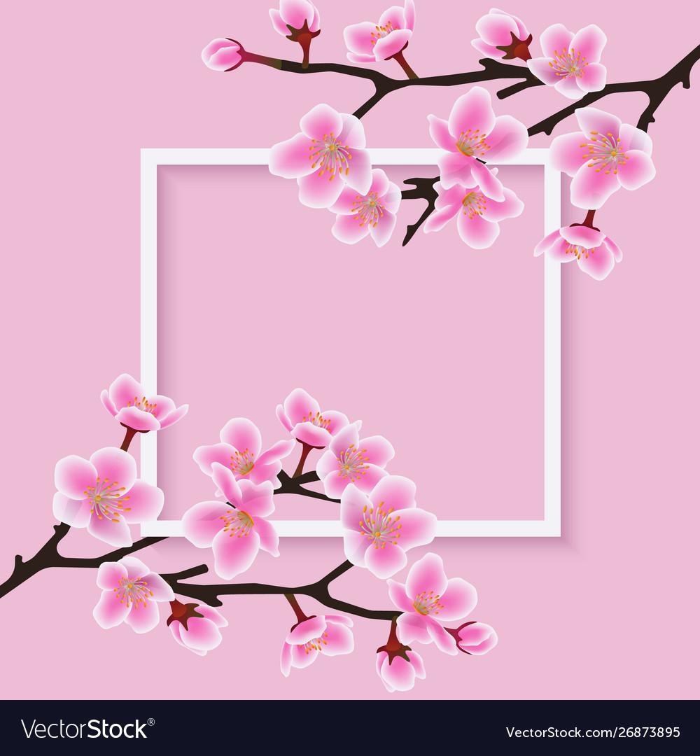Square frame with a sakura or cherry blossom