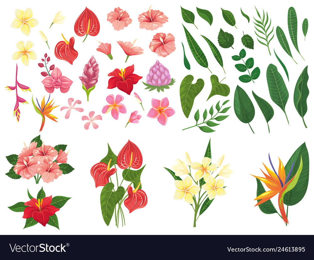 Tropical flower tropic forest flowers exotic