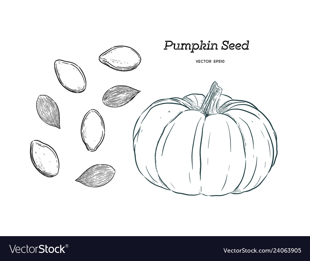 Pumpkin seed hand draw