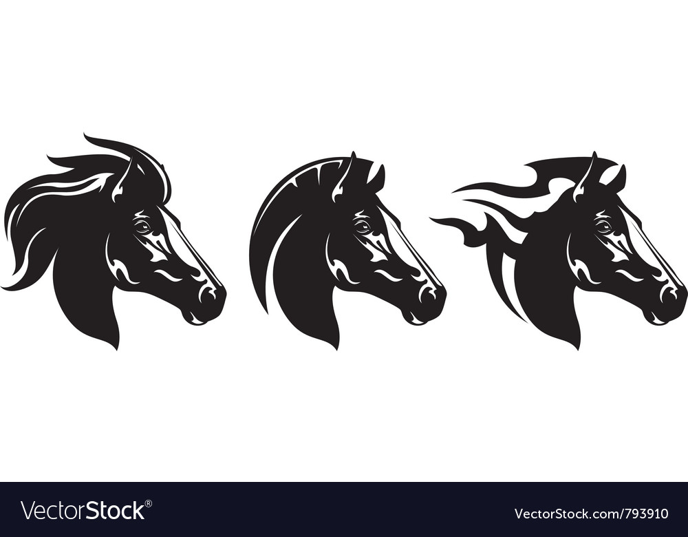 Horse heads vector image