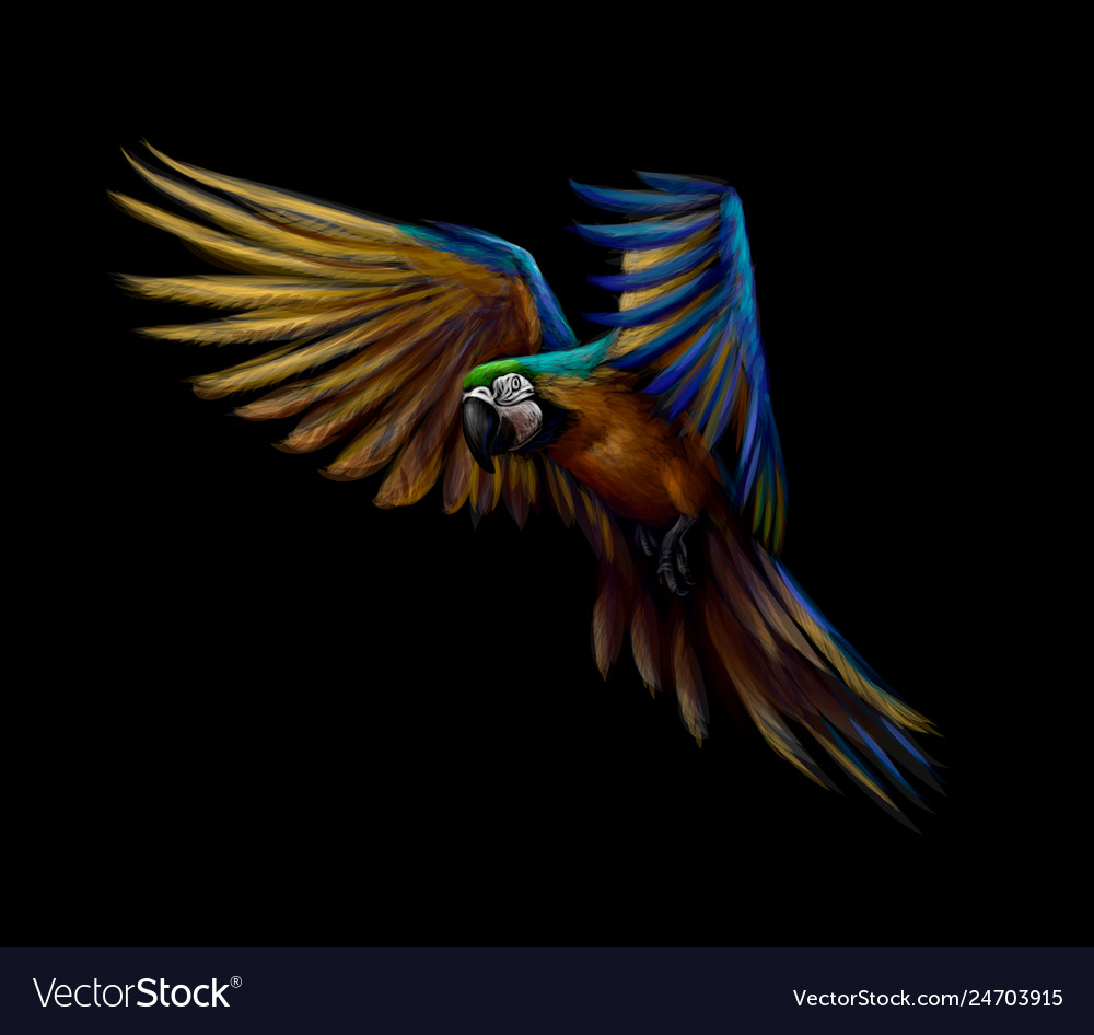 Portrait blue-and-yellow macaw in flight on a