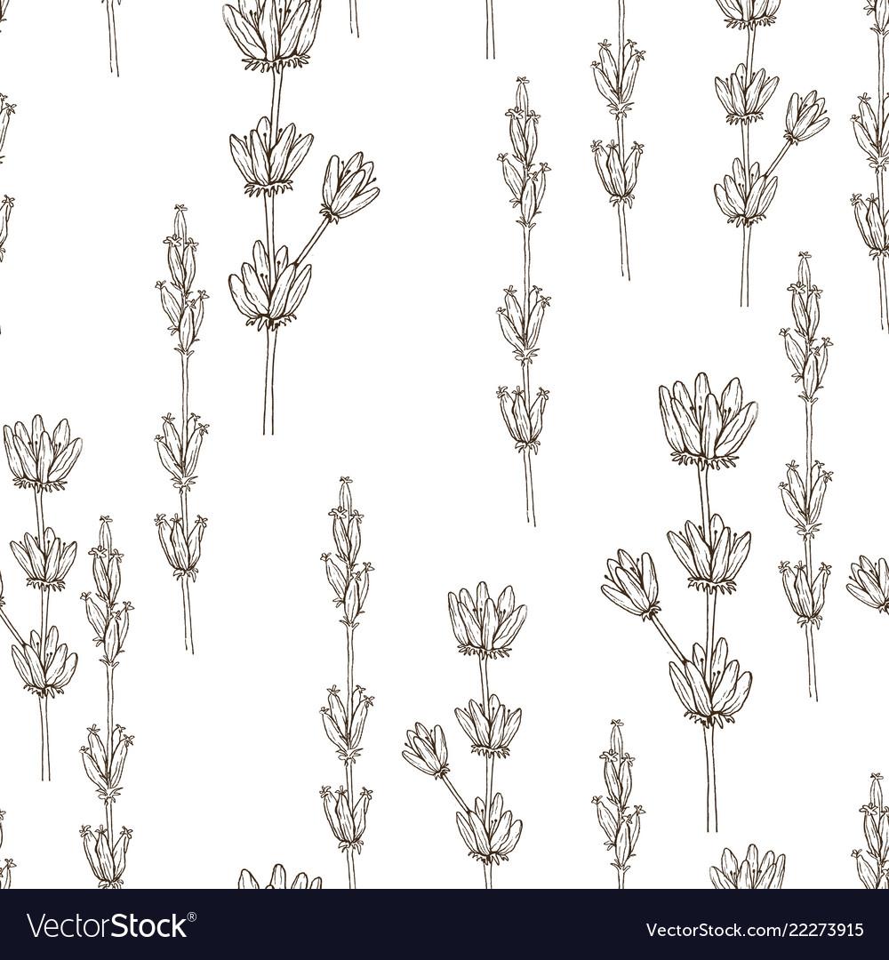 Seamless pattern of wild herbal flowers