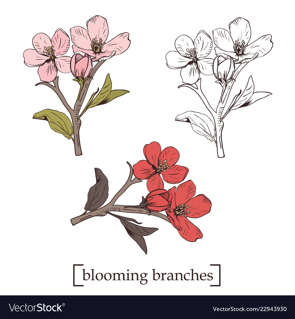 Blooming tree set collection hand drawn