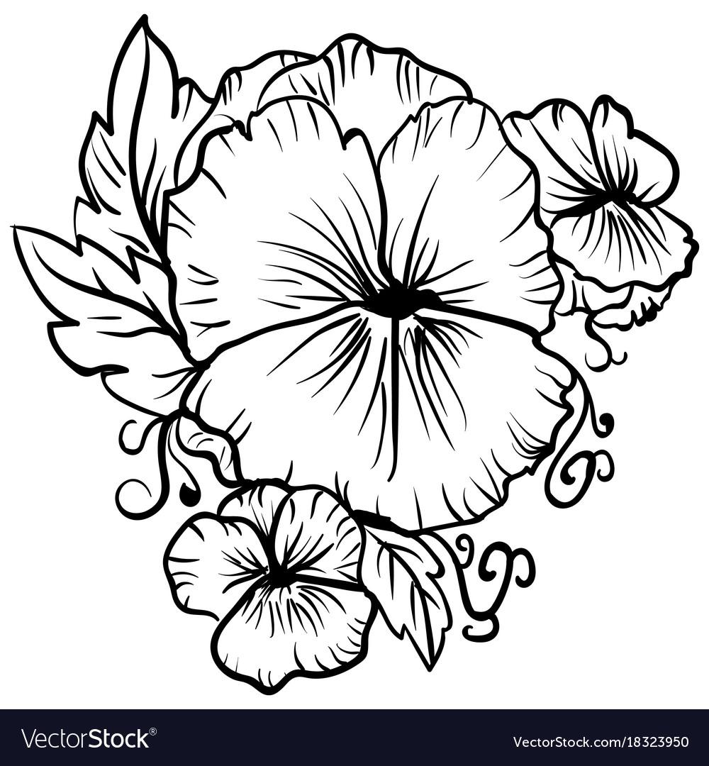 Elegant decorative pansy flowers sketch pansies vector image mightylinksfo