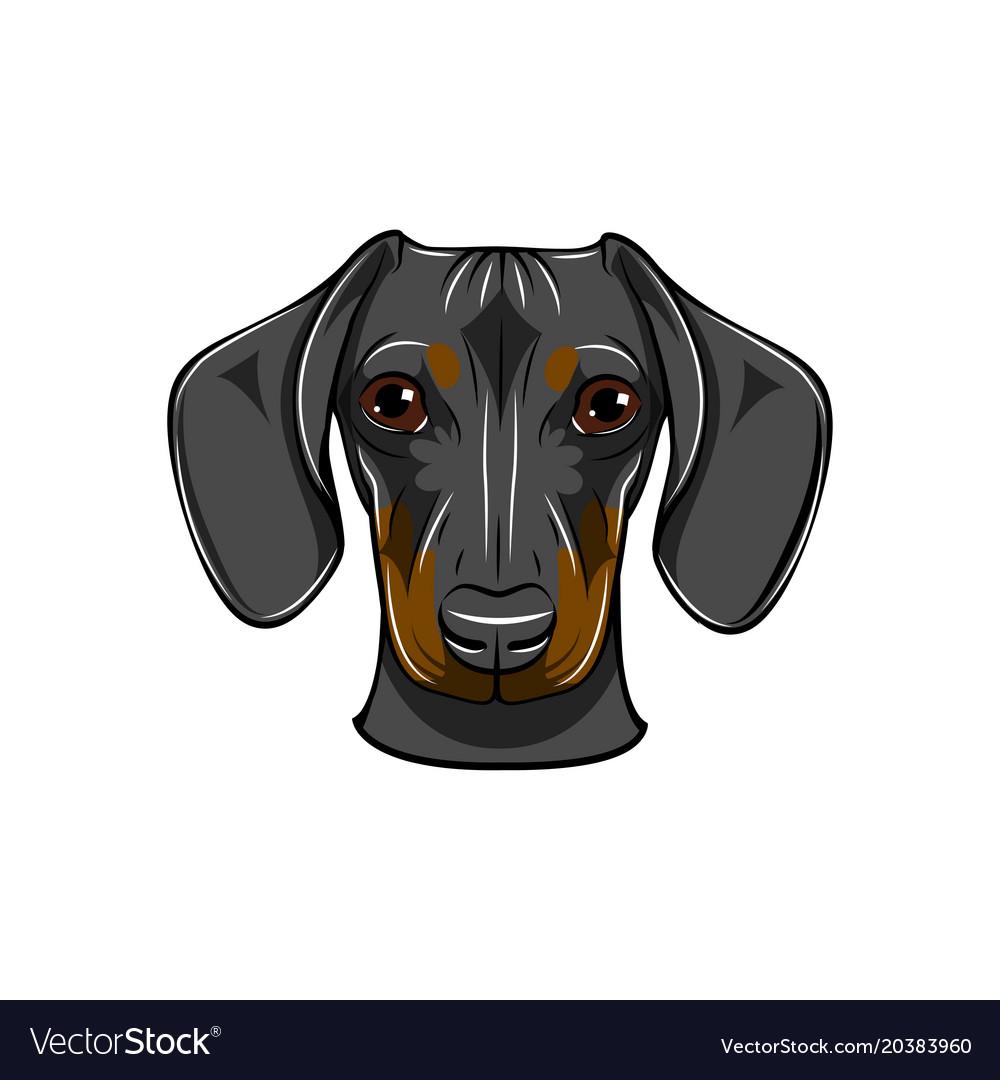 Funny cartoon dachshund dog head