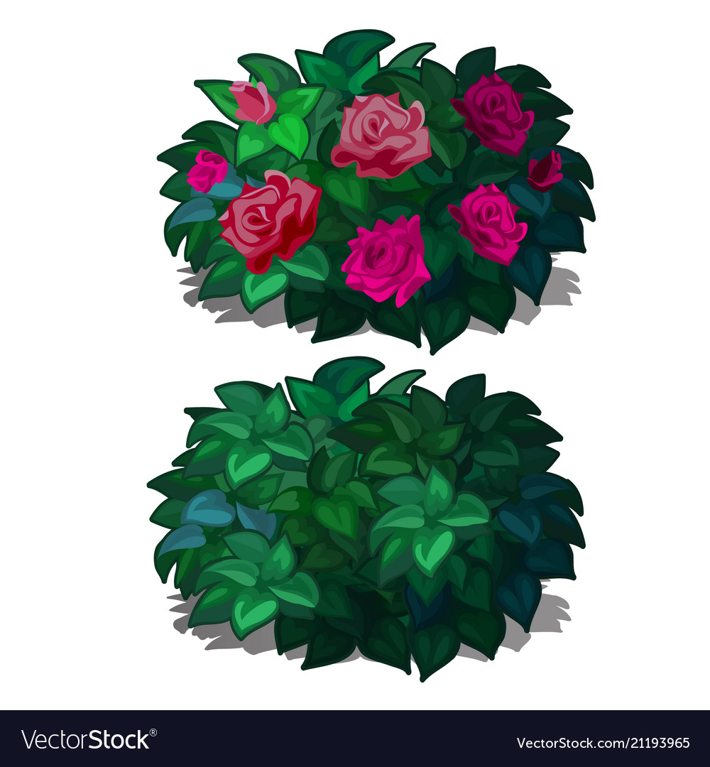 Set compact rounded shrubs with flowers roses