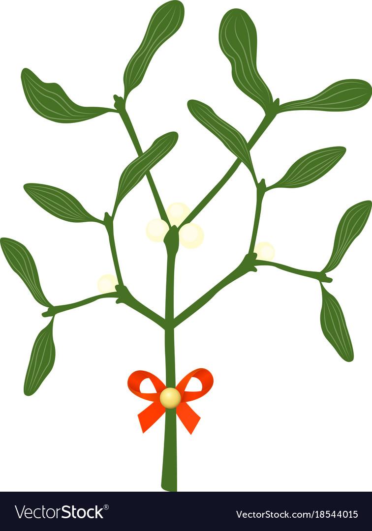 Mistletoe branches