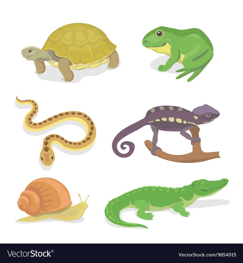 Reptiles and amphibians decorative set of