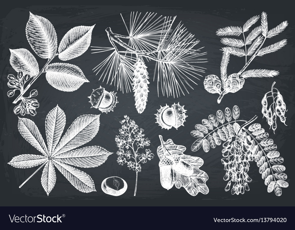 Collection of hand drawn trees vector image