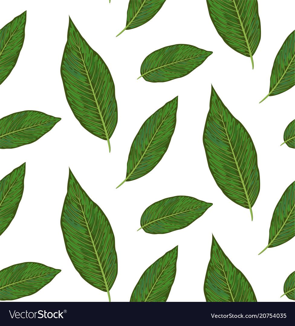 Seamless pattern with diffenbachia plants green