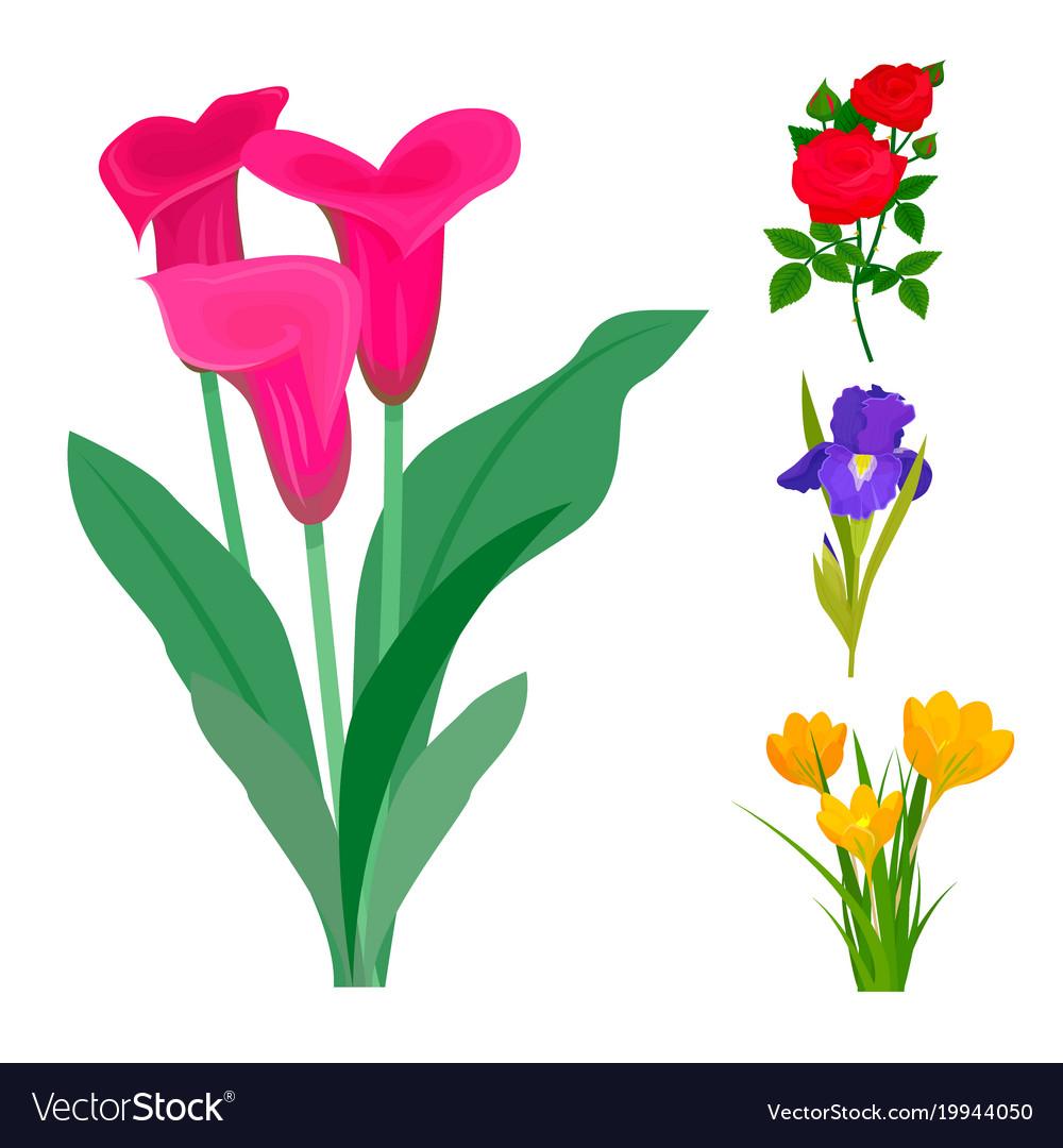 Beautiful flower bouquet design decoration vector image izmirmasajfo