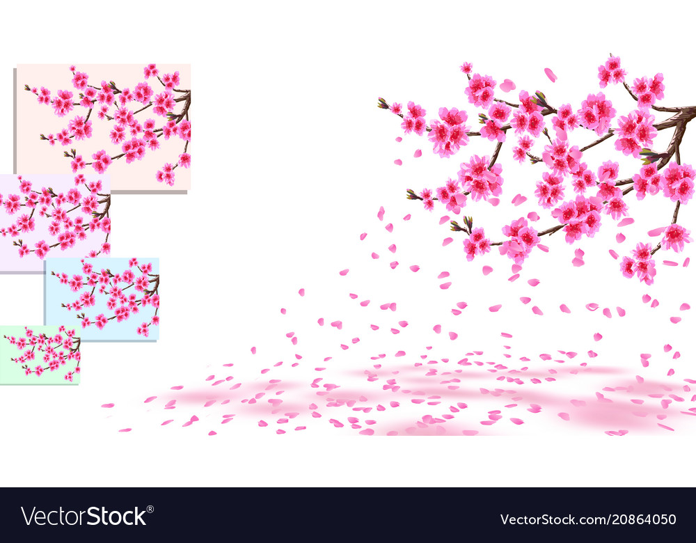 Sakura is losing petals curved branches of a