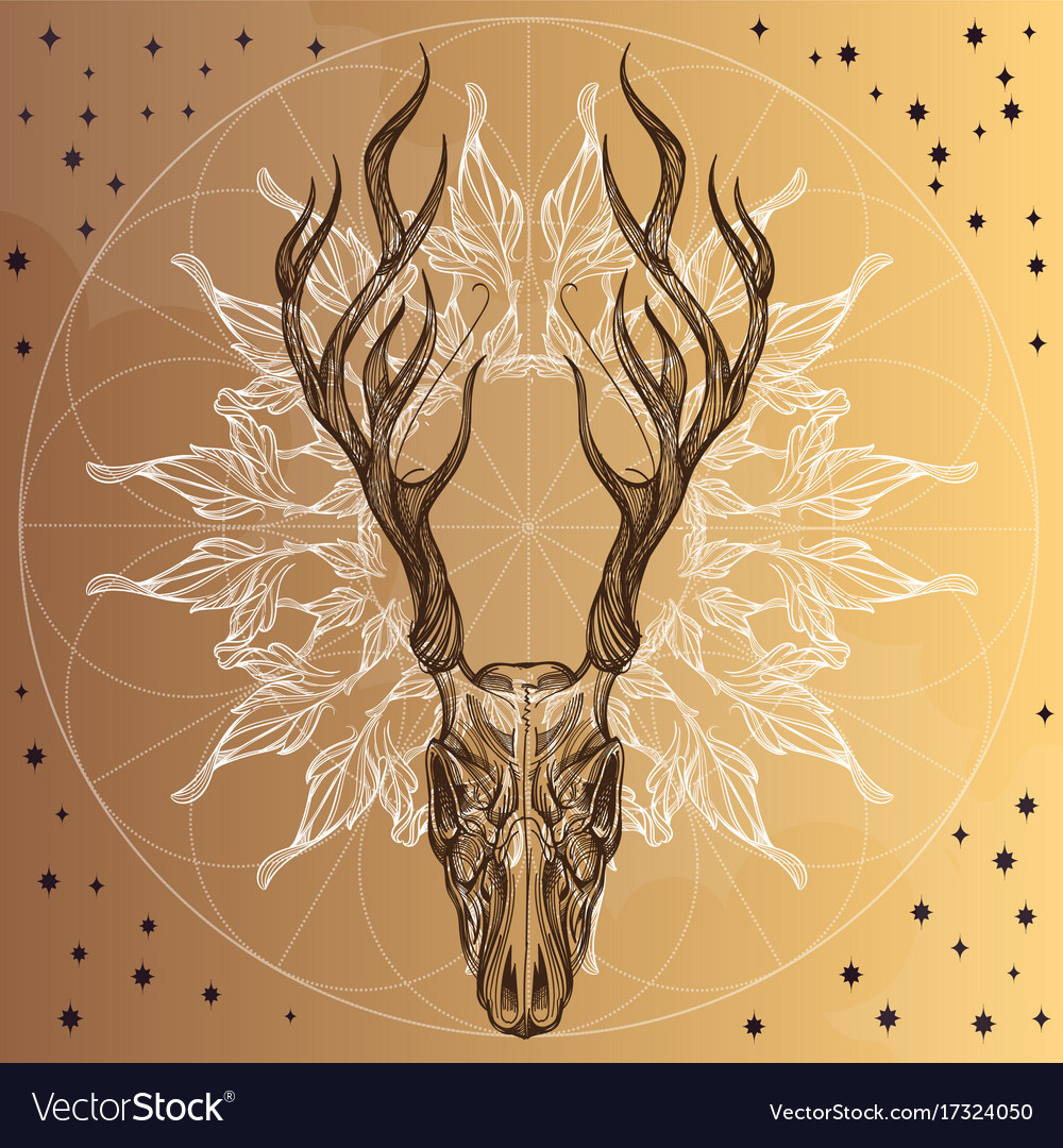 Sketch of deer skull with decorative floral vector image