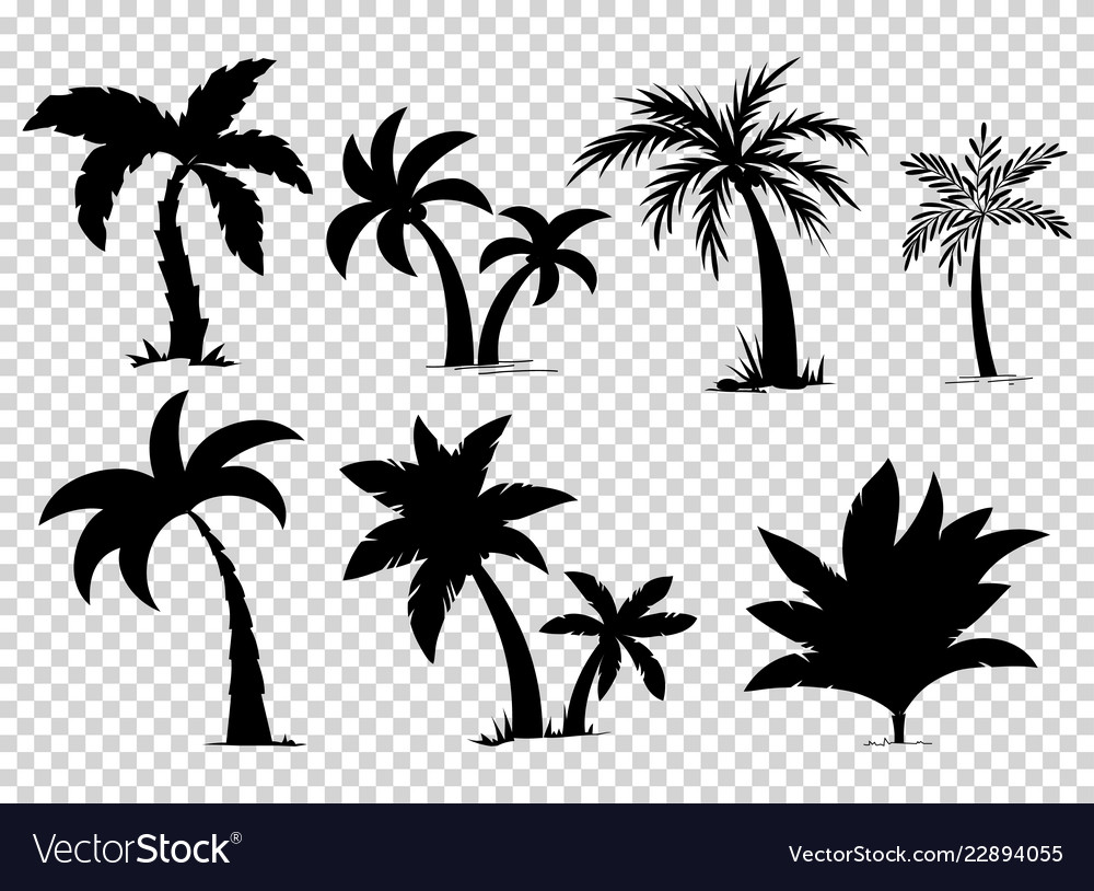 Set tropical palm trees with leaves mature