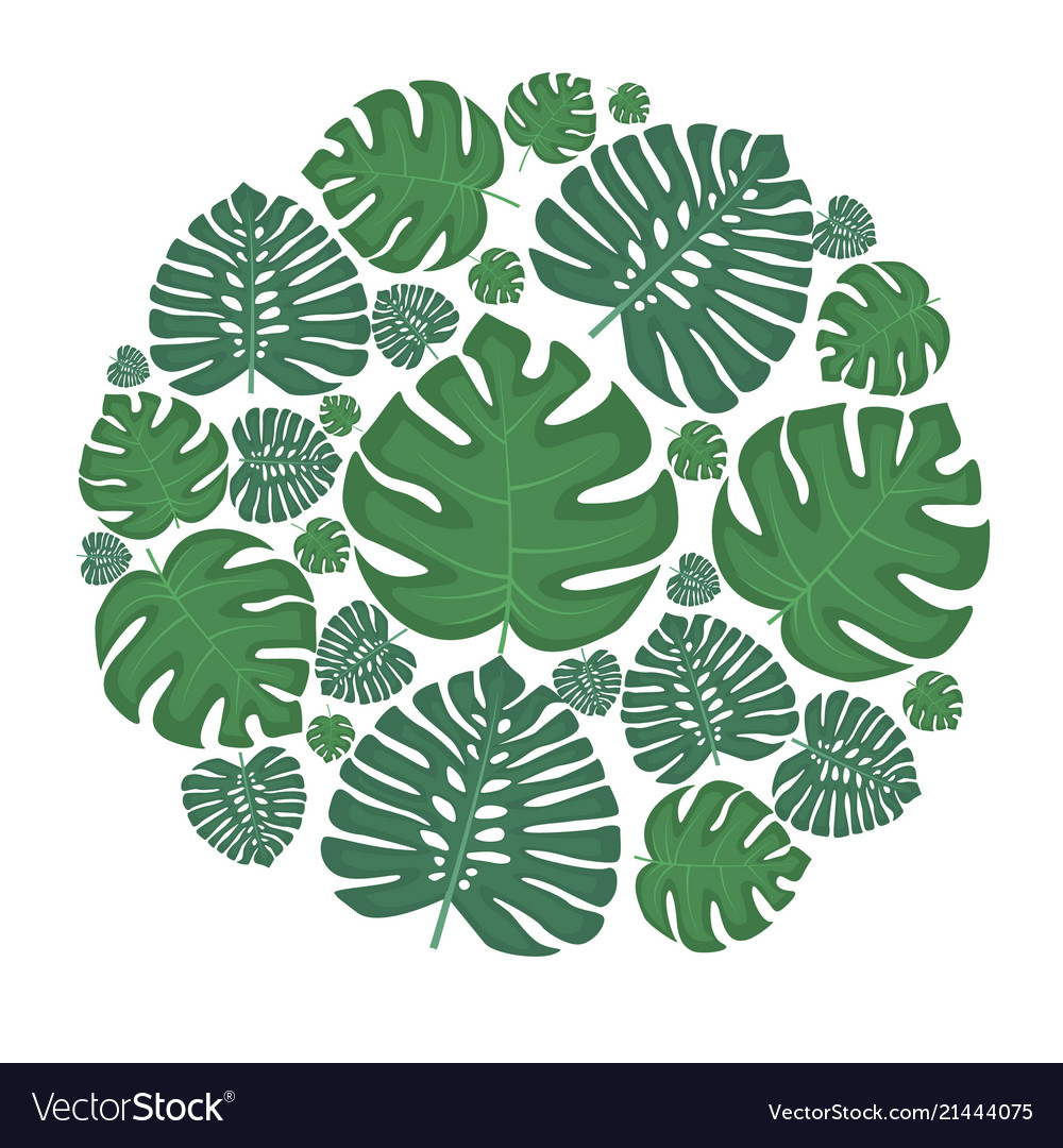 Palm green leaves