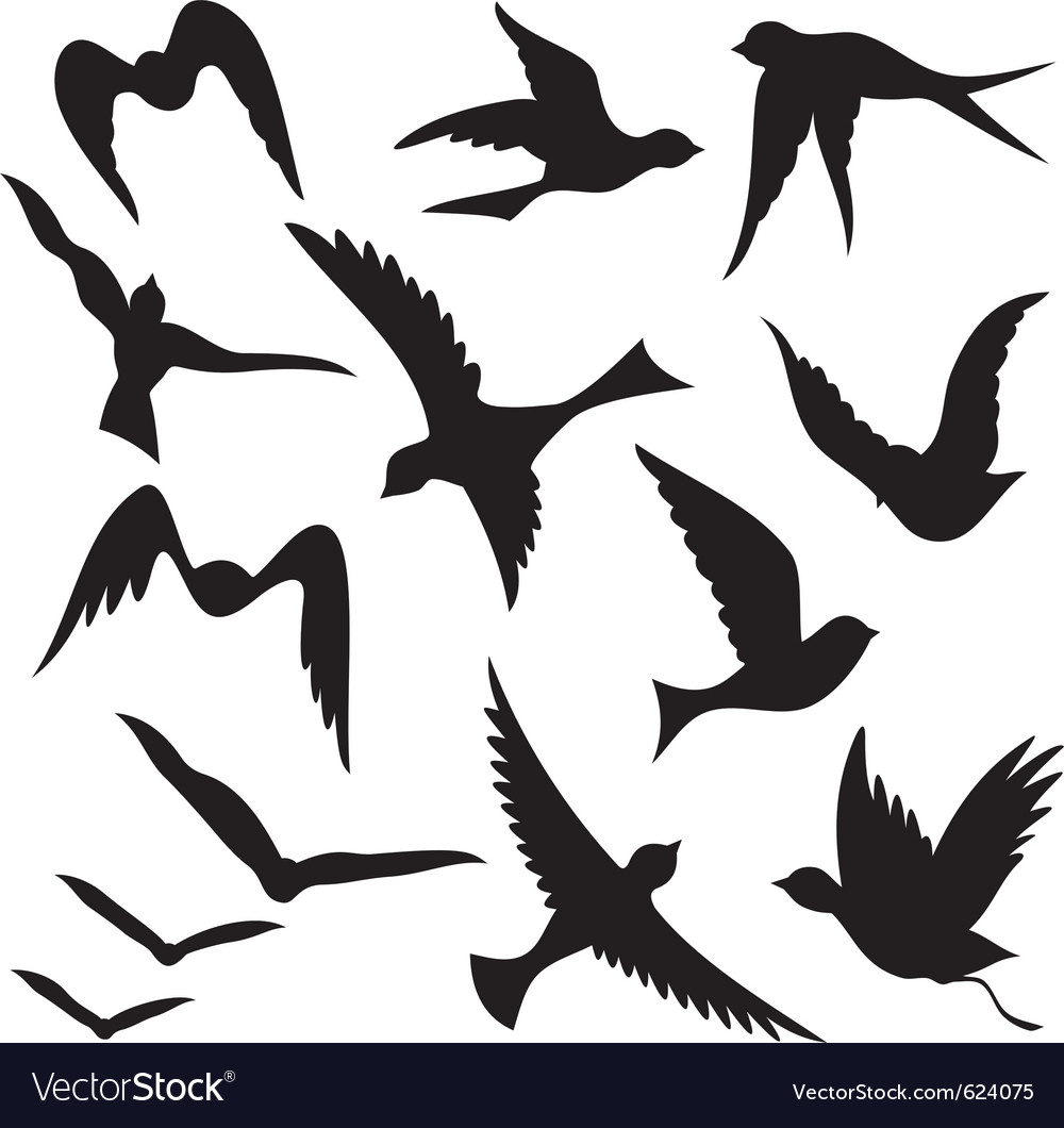 set of flying birds royalty free vector image vectorstock rh vectorstock com bird vector free download bird vector graphics