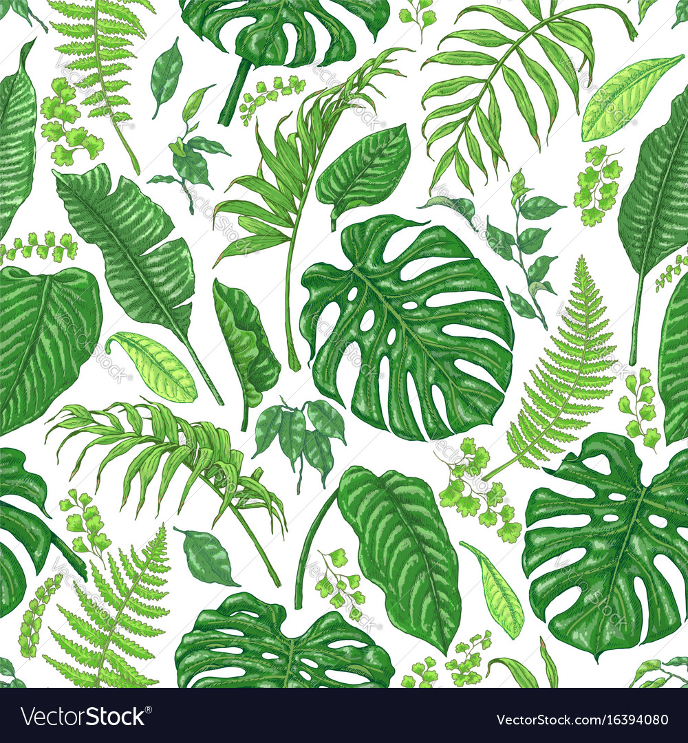 hand drawn tropical plants pattern royalty free vector image free vector palm tree clipart free clipart palm tree silhouette