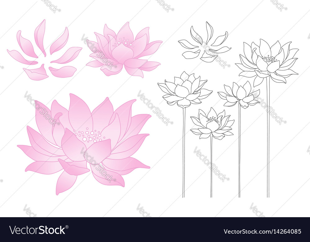 Lotus Flowers And Petals Royalty Free Vector Image