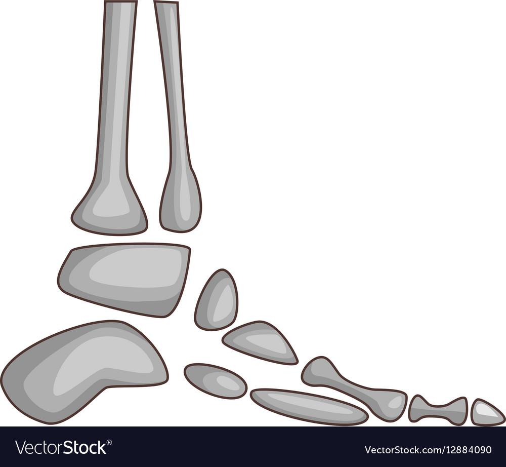 Foot bones icon cartoon style vector image