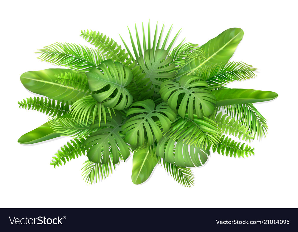A bunch of tropical leaves