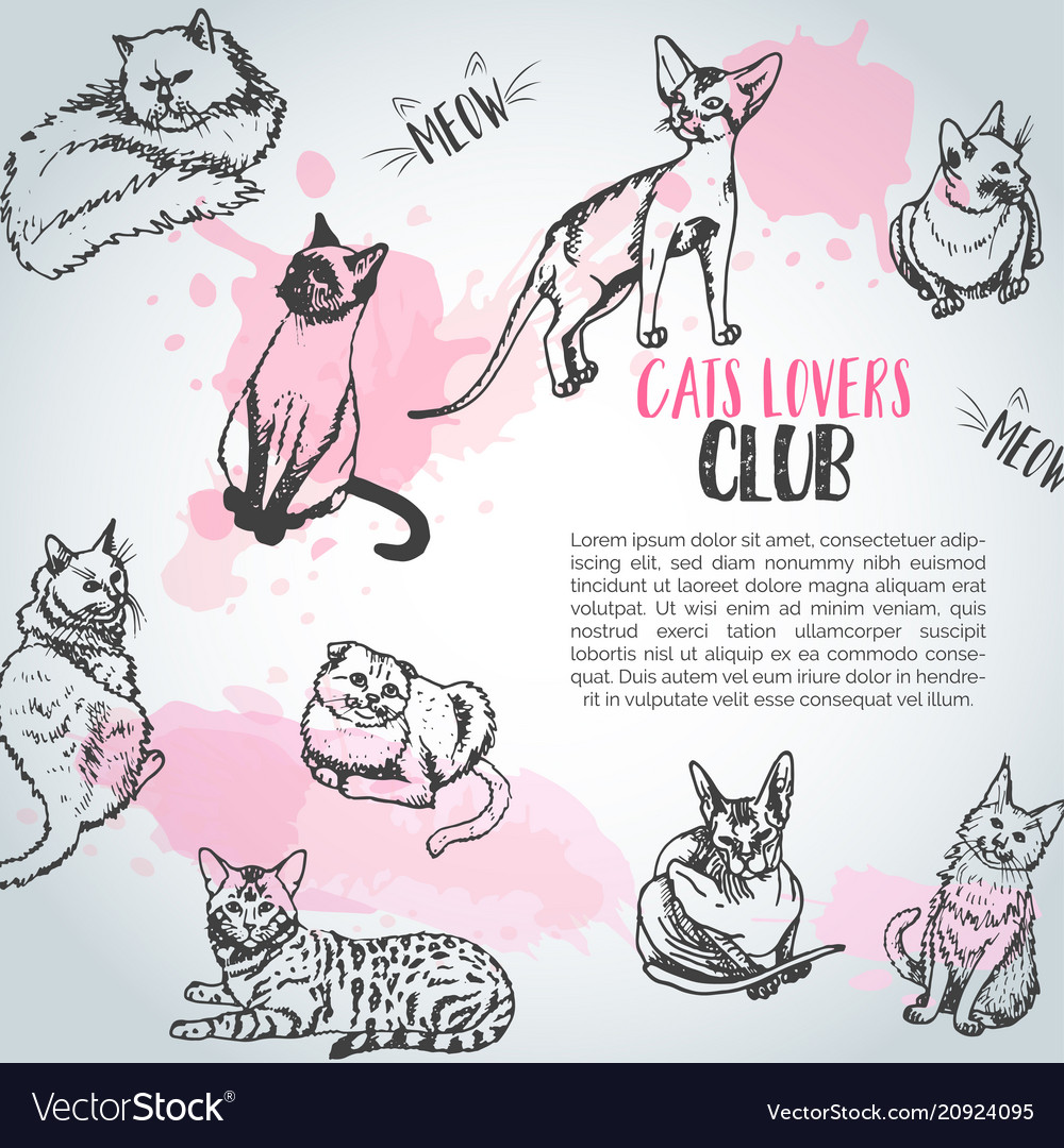 Background with cat breeds cats lovers club cute