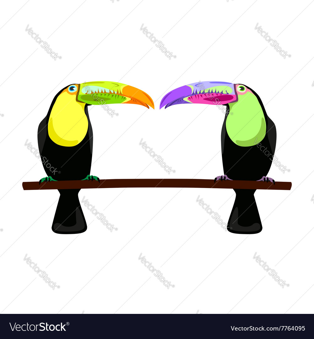 Two flat toucans