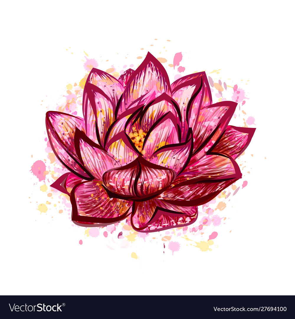 Lotus flower isolated on white hand drawn sketch