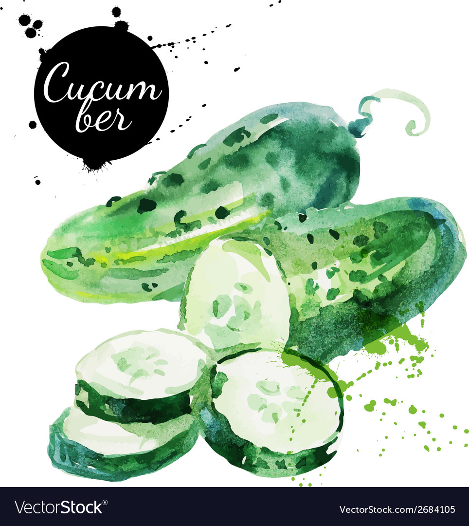 Green cucumber Hand drawn watercolor painting