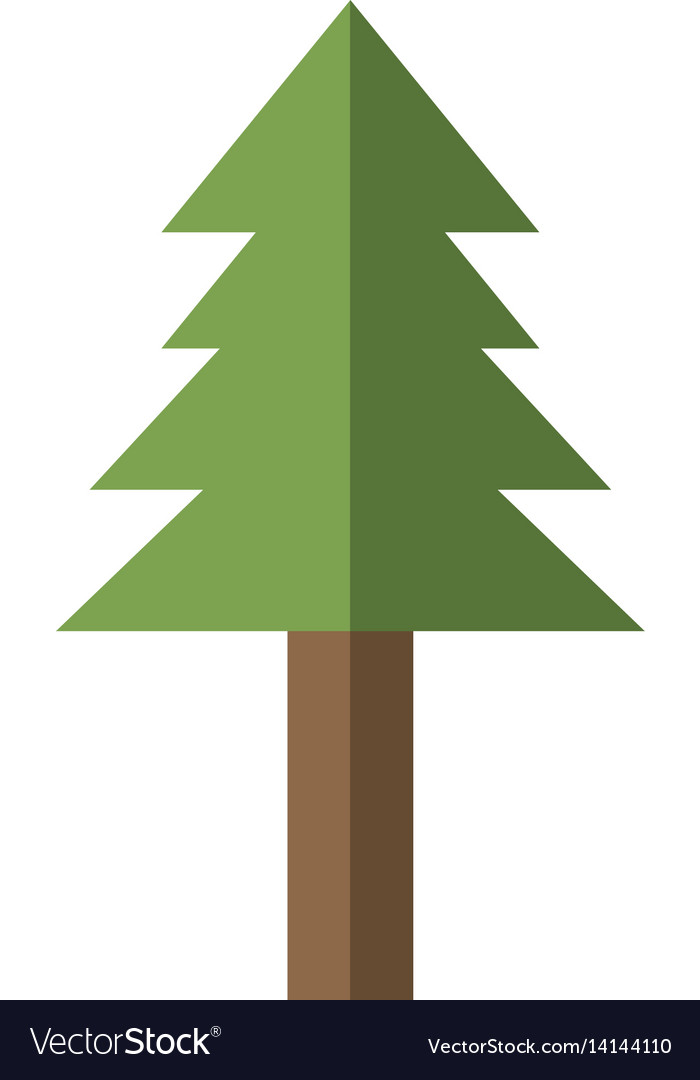 Pine tree plant nature image