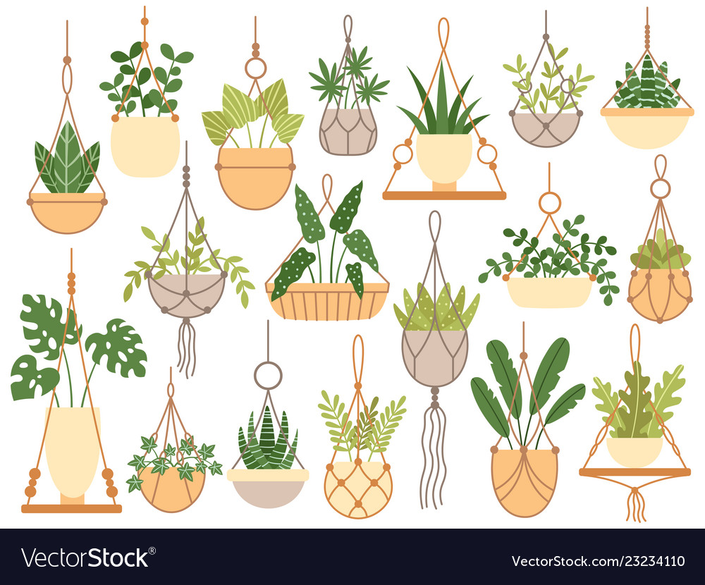 Plants in hanging pots decorative macrame