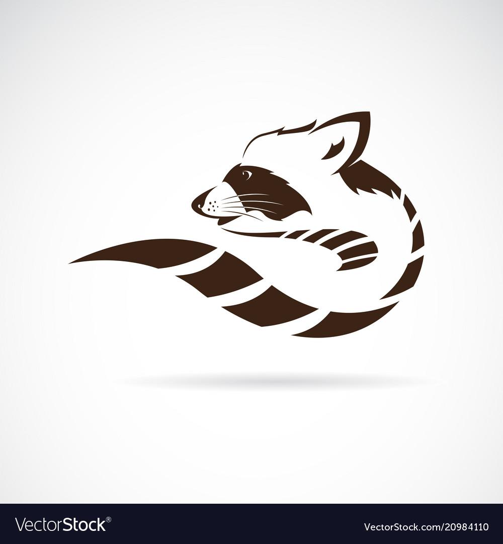 Raccoon design on white background wild animals